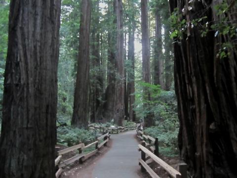 [Photo : Forêt primaire de Muir Wood]