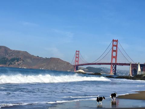 [Photo : Plage de San Francisco avec vue sur le Golden Gate Bridge]