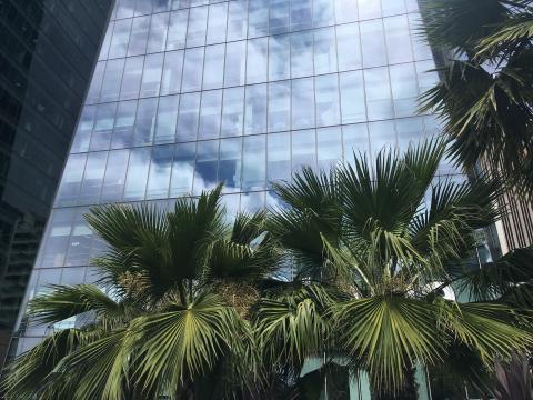 [Photo : reflet des palmiers sur une tour de verre SOMA San Francisco]