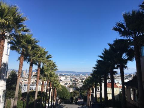 [Photo : rue en pente avec palmier et vue sur la Baie de San Francisco]